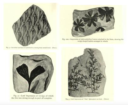Ancient Plants Images