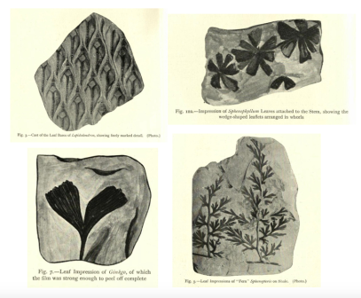 Ancient Plants Images